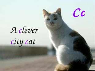 Cc A clever city cat