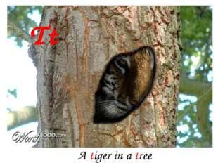 Tt A tiger in a tree