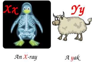 Xx Yy An X-ray A yak
