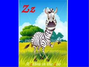 Zz A zebra in the zoo