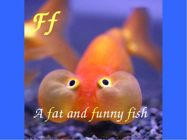 Ff A fat and funny fish
