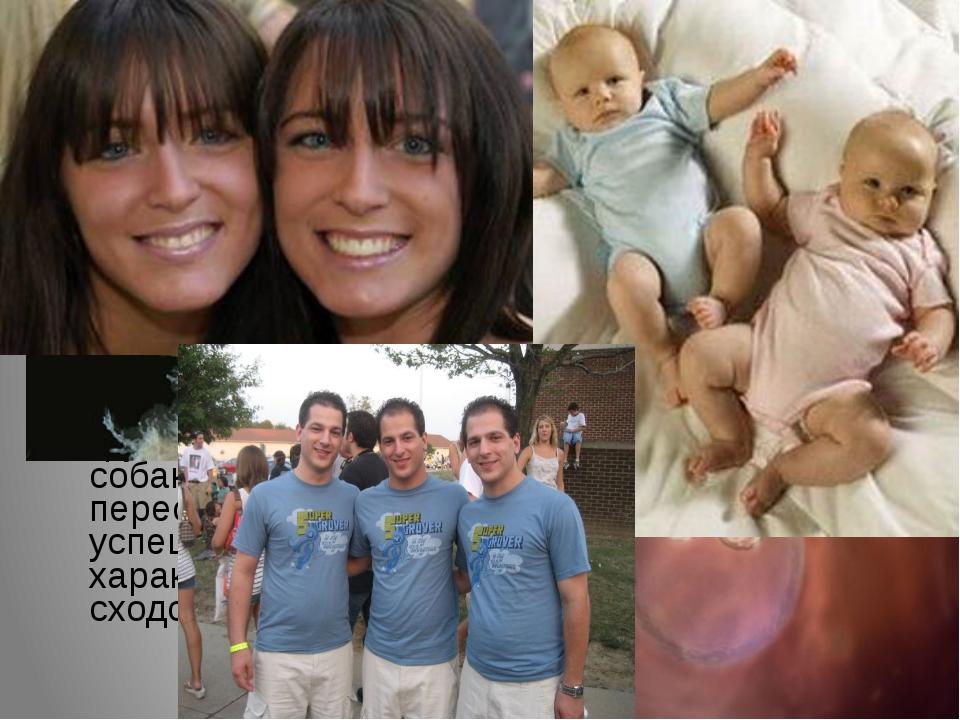 Монозиготные и дизиготные близнецы Монозиготные близнецы развиваются из одной...