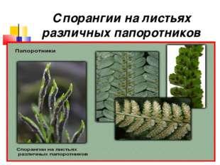 Спорангии на листьях различных папоротников