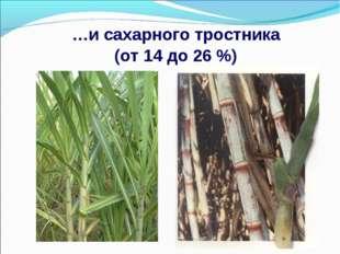…и сахарного тростника (от 14 до 26 %)