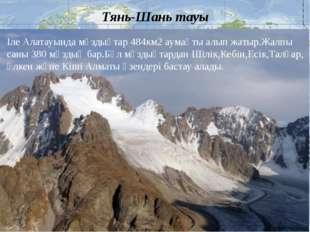 Тянь-Шань тауы Іле Алатауында мұздықтар 484км2 аумақты алып жатыр.Жалпы саны