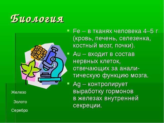Биология Fe – в тканях человека 4–5 г (кровь, печень, селезенка, костный мозг...