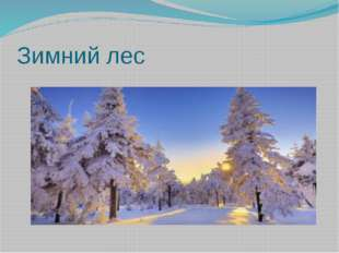 Зимний лес