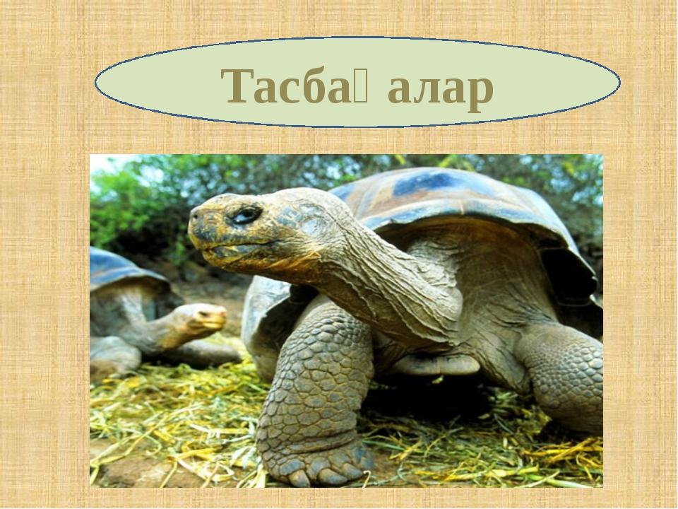 Тасбақалар
