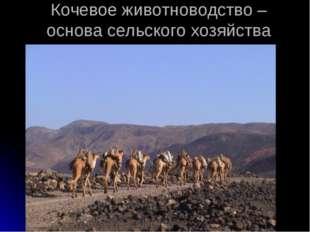 Кочевое животноводство – основа сельского хозяйства