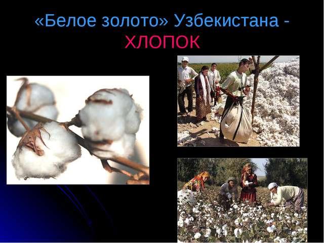 «Белое золото» Узбекистана - ХЛОПОК