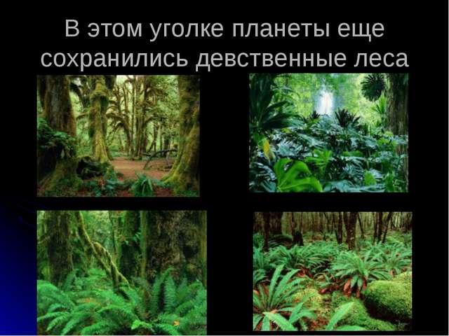 В этом уголке планеты еще сохранились девственные леса