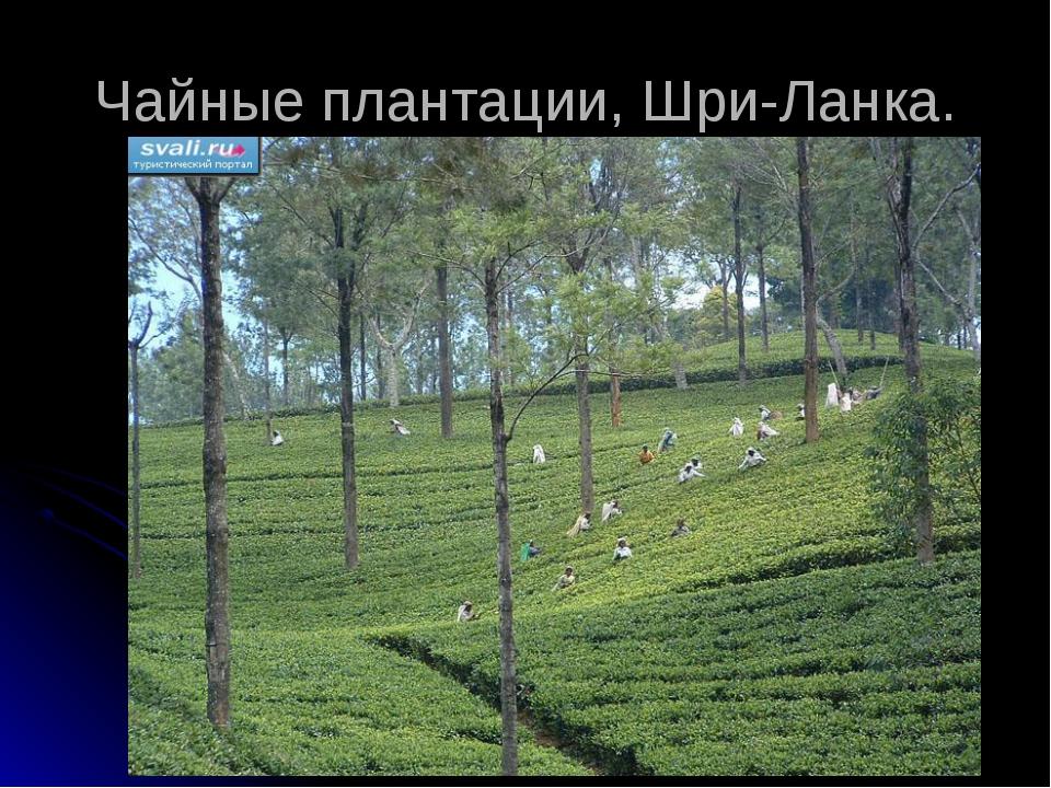 Чайные плантации, Шри-Ланка.