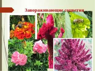 Завораживающие соцветия