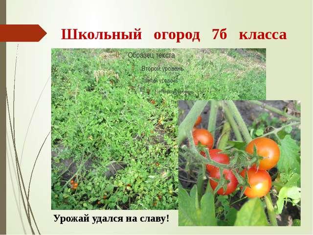 Школьный огород 7б класса Урожай удался на славу!
