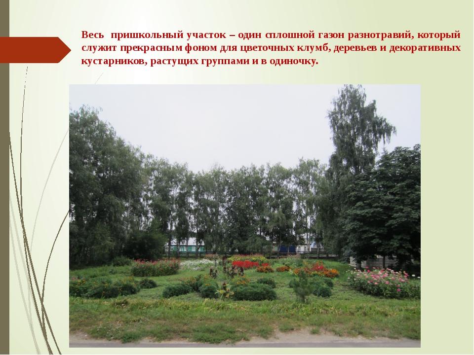 Весь пришкольный участок – один сплошной газон разнотравий, который служит пр...