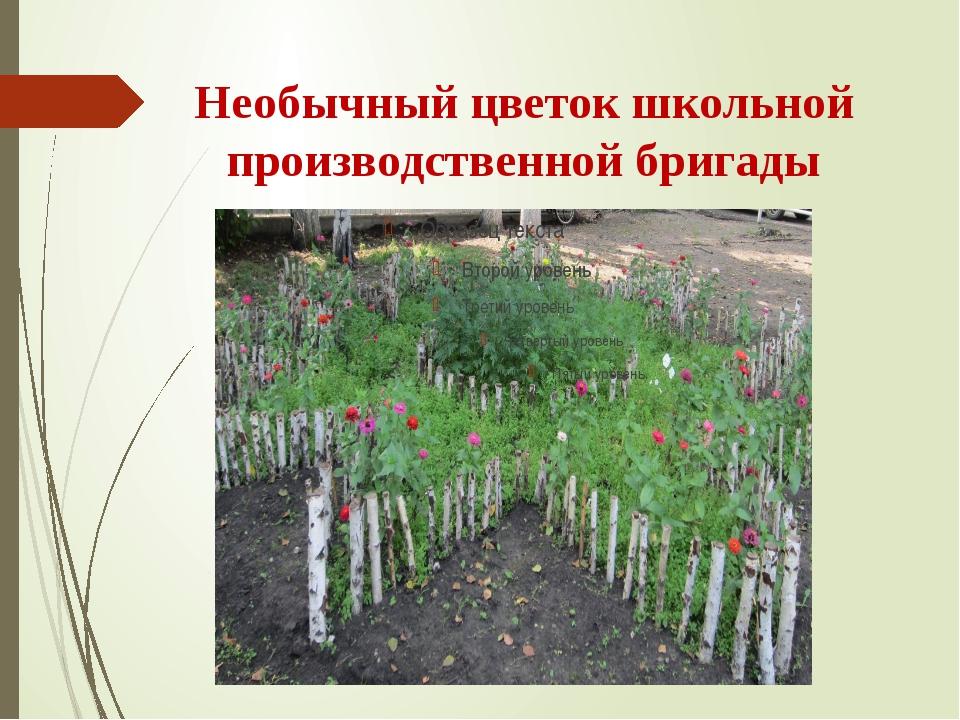 Необычный цветок школьной производственной бригады