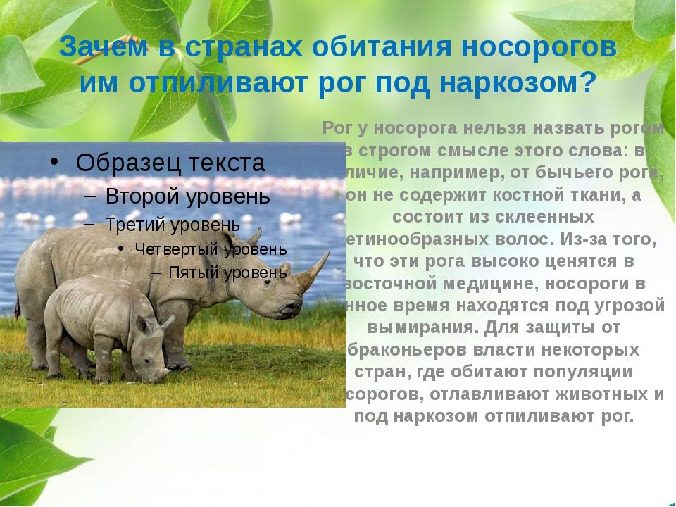 Зачем в странах обитания носорогов им отпиливают рог под наркозом? Рог у носо...