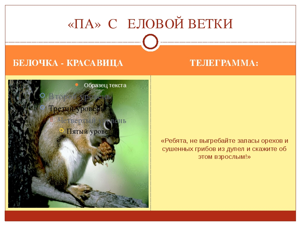 БЕЛОЧКА - КРАСАВИЦА ТЕЛЕГРАММА: «Ребята, не выгребайте запасы орехов и сушенн...