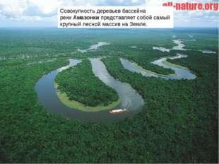 Совокупность деревьев бассейна рекиАмазонкипредставляет собой самый крупный