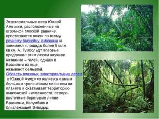 Экваториальные лесаЮжной Америки, расположенные на огромной плоской равнине,