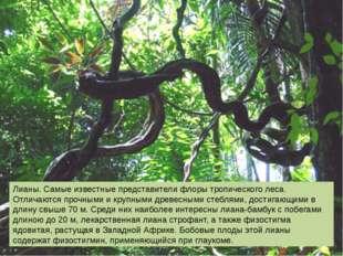 Лианы. Самые известные представители флоры тропического леса. Отличаются проч