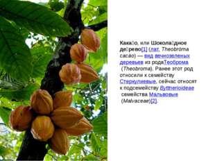 Кака́о, илиШокола́дное де́рево[1](лат.Theobrōma cacāo)—видвечнозеленых