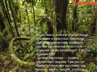 Из-за тепла, влаги и обилия пищи растения и животные Амазонки достигают гиган