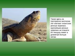 Также здесь на протяжении миллиона лет обитают гигантские речные черепахи, кр