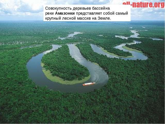Совокупность деревьев бассейна рекиАмазонкипредставляет собой самый крупный...
