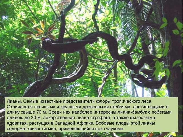 Лианы. Самые известные представители флоры тропического леса. Отличаются проч...
