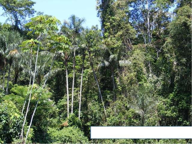 Непроходимые леса