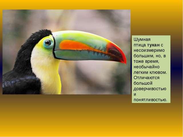 Шумная птицатуканс несоизмеримо большим, но, в тоже время, необычайно легки...