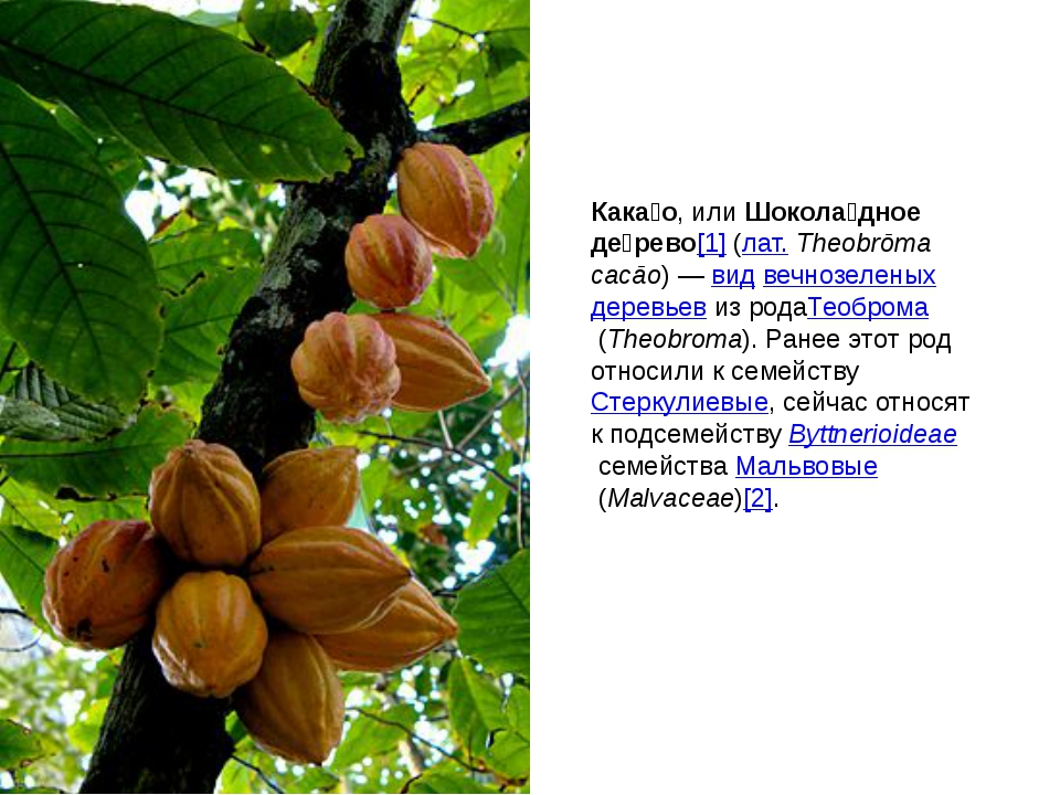 Кака́о, илиШокола́дное де́рево[1](лат.Theobrōma cacāo)—видвечнозеленых...