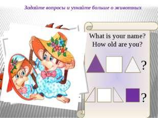 Задайте вопросы и узнайте больше о животных What is your name? How old are yo