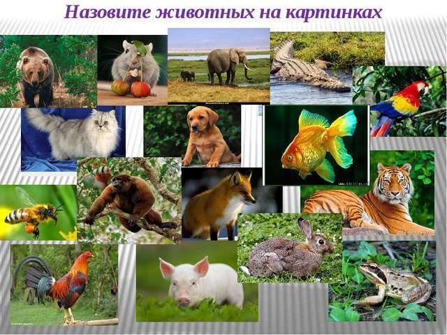 Назовите животных на картинках