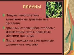 ПЛАУНЫ Плауны -многолетние вечнозеленые травянистые растения Длинный стелющий