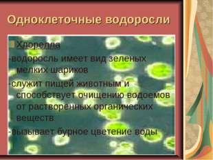 Одноклеточные водоросли Хлорелла -водоросль имеет вид зеленых мелких шариков