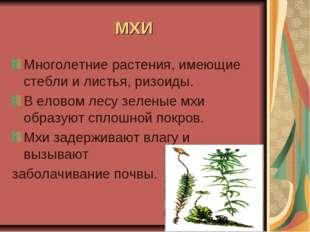 МХИ Многолетние растения, имеющие стебли и листья, ризоиды. В еловом лесу зел