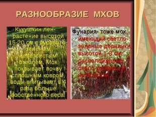 Кукушкин лен- растение высотой 15-20 см с буровато-зеленым неветвистым стебле
