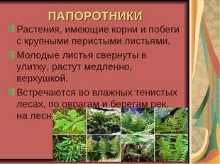 ПАПОРОТНИКИ Растения, имеющие корни и побеги с крупными перистыми листьями. М