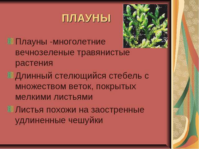 ПЛАУНЫ Плауны -многолетние вечнозеленые травянистые растения Длинный стелющий...