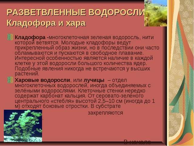 РАЗВЕТВЛЕННЫЕ ВОДОРОСЛИ: Кладофора и хара Кладофора -многоклеточная зеленая в...