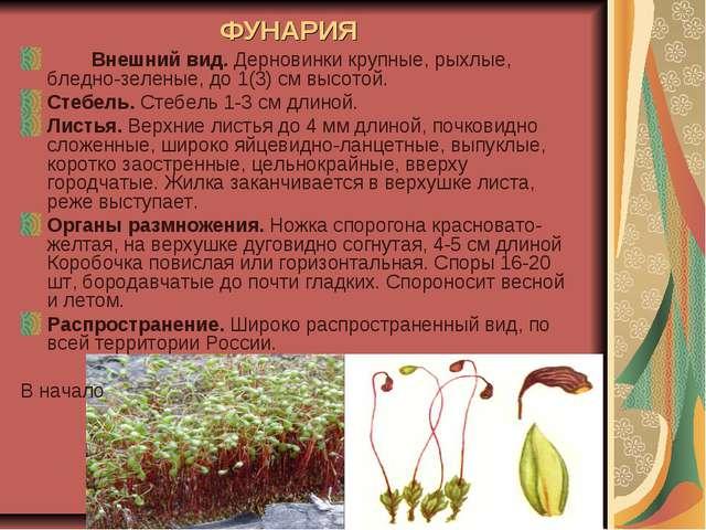 ФУНАРИЯ Внешний вид. Дерновинки крупные, рыхлые, бледно-зеленые, до 1(3) см...