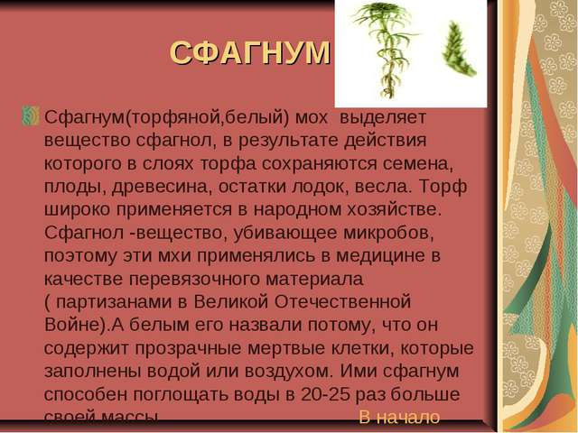 СФАГНУМ Сфагнум(торфяной,белый) мох выделяет вещество сфагнол, в результате д...