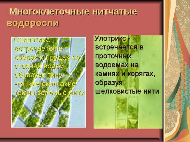 Спирогира- встречается в озерах и прудах со стоячей водой, образует тину -то...