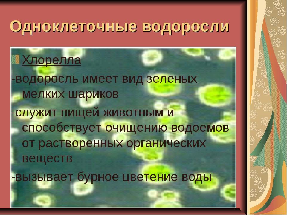 Одноклеточные водоросли Хлорелла -водоросль имеет вид зеленых мелких шариков...