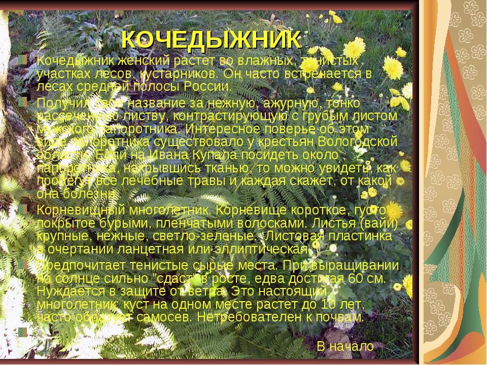 КОЧЕДЫЖНИК Кочедыжник женский растет во влажных, тенистых участках лесов, кус...