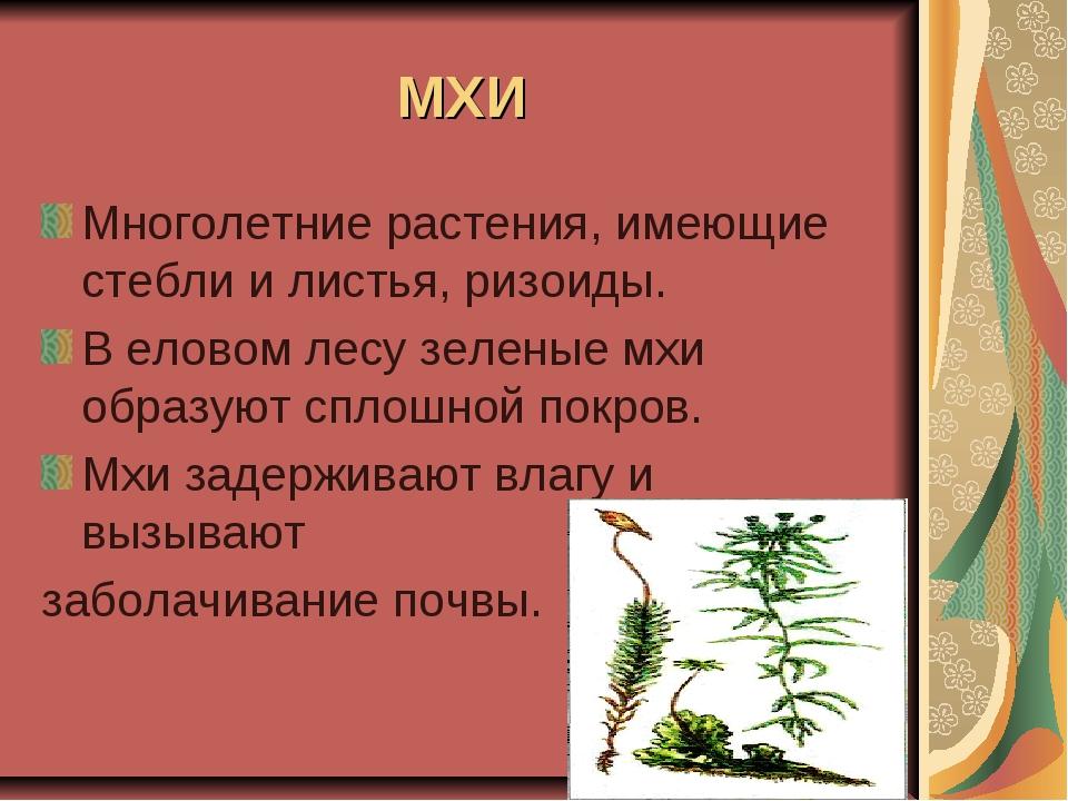 МХИ Многолетние растения, имеющие стебли и листья, ризоиды. В еловом лесу зел...