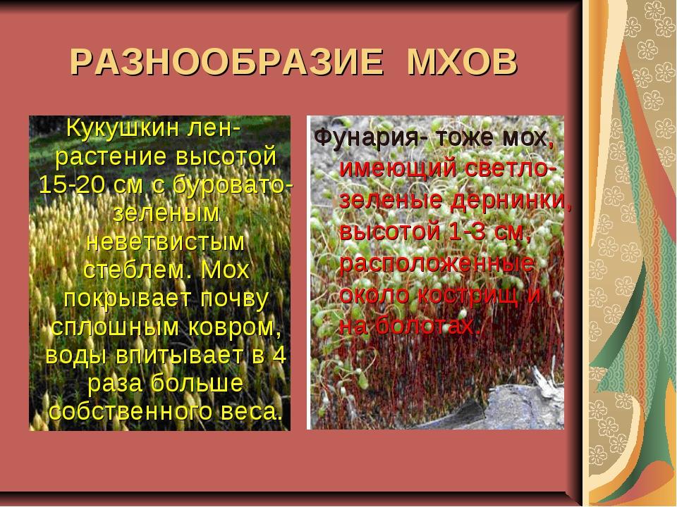 Кукушкин лен- растение высотой 15-20 см с буровато-зеленым неветвистым стебле...