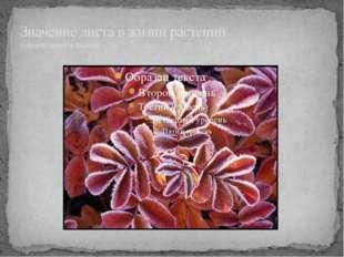 Значение листа в жизни растений (сформулируйте вывод)